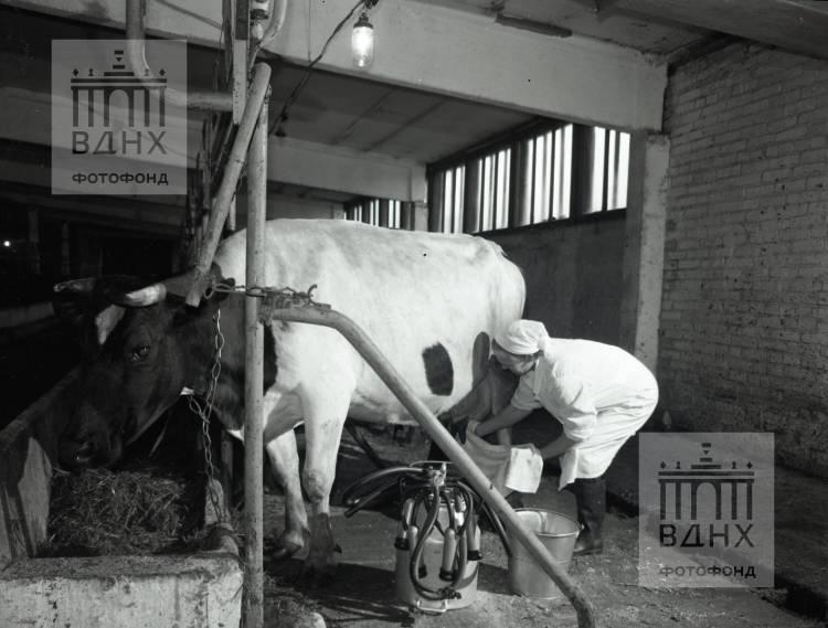"""Фотография для павильона """"Ветеринарная поликлиника"""""""