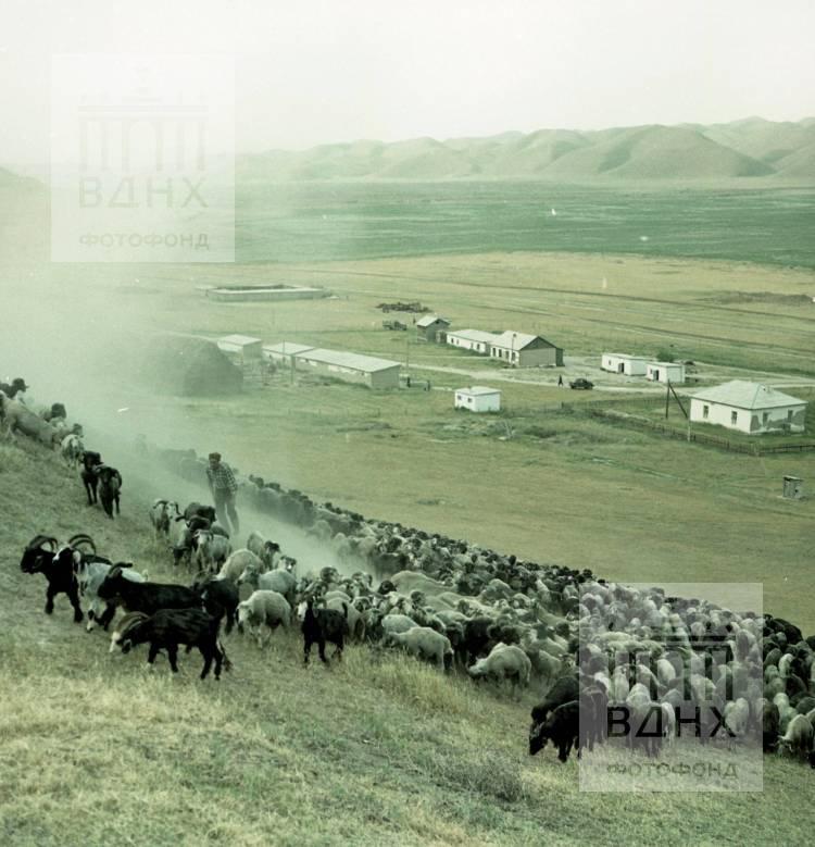 Фотография из поездки Будакова Ю.С. в Туркменскую ССР