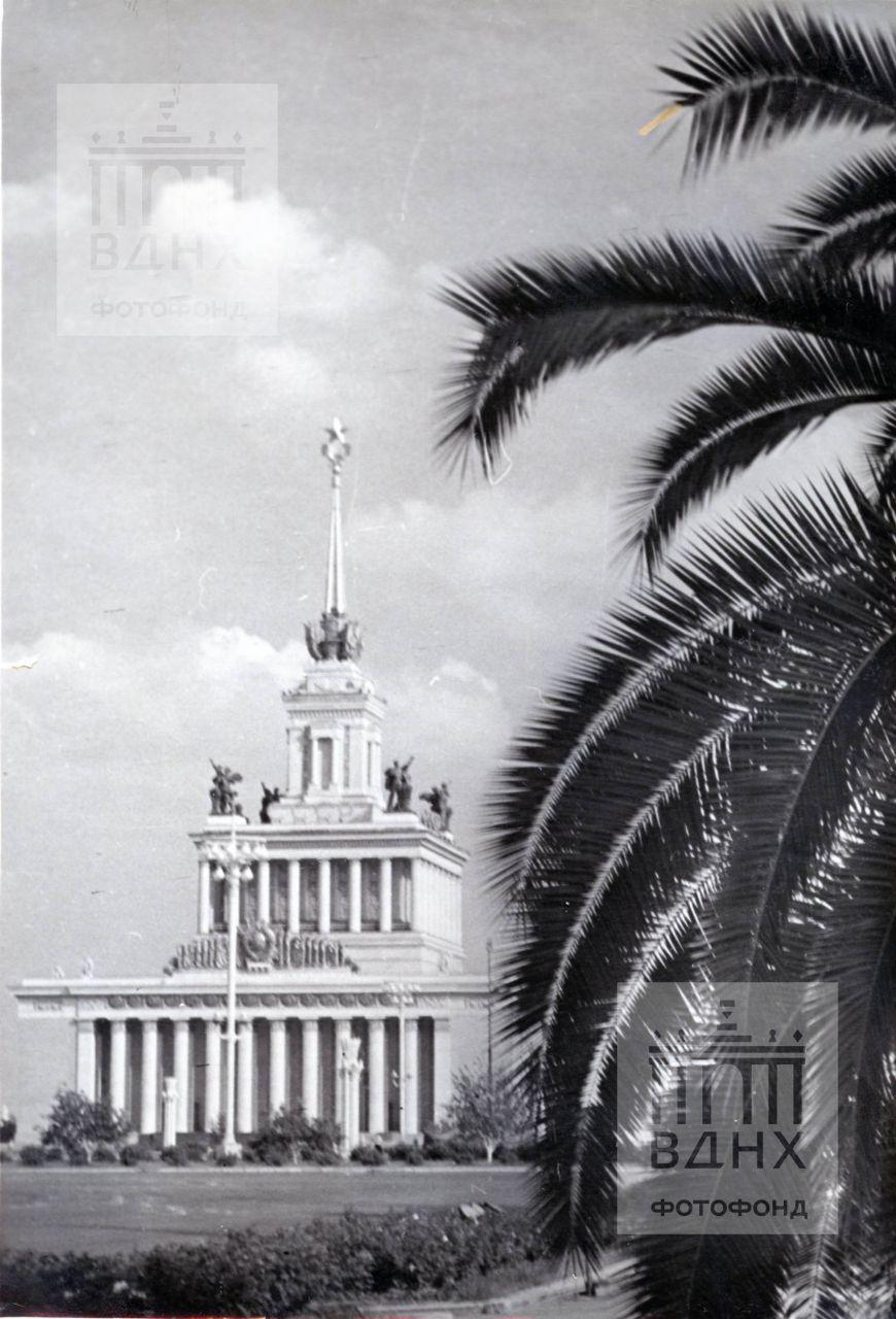 Вид на Главный павильон с пальмой.